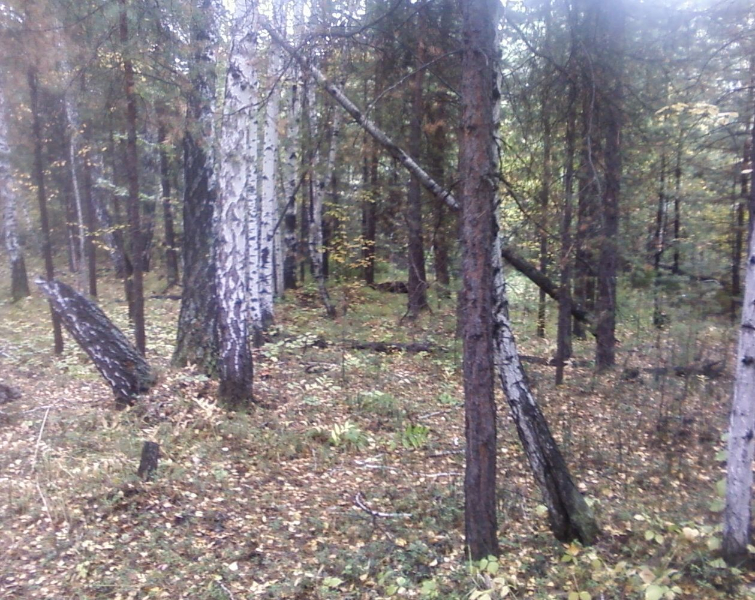 лес14