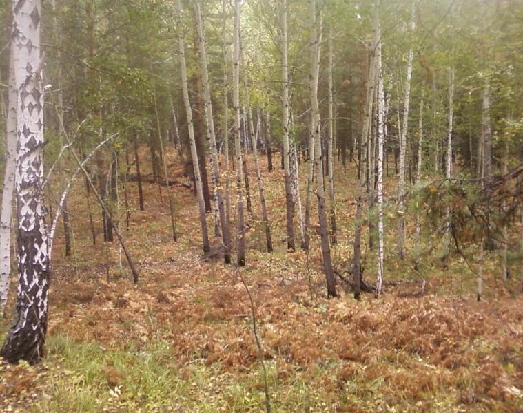 лес17
