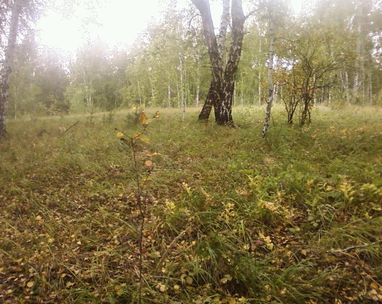 лес20