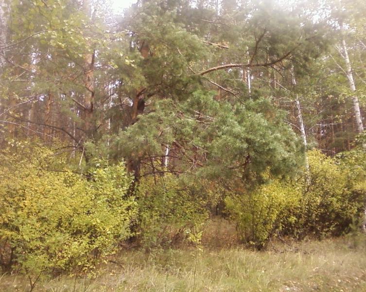 лес23