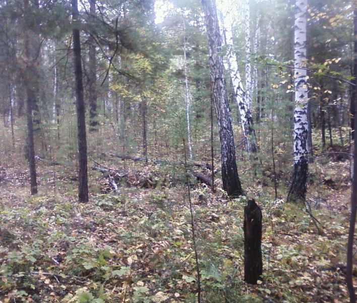 лес12