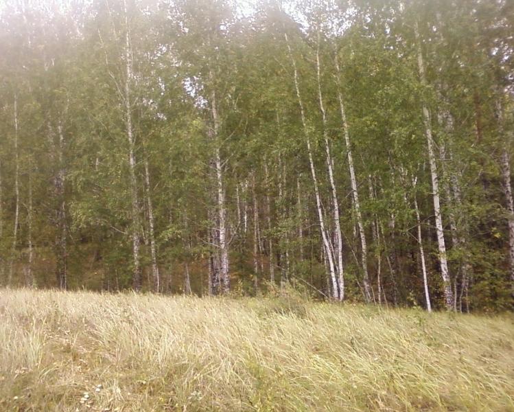 лес22