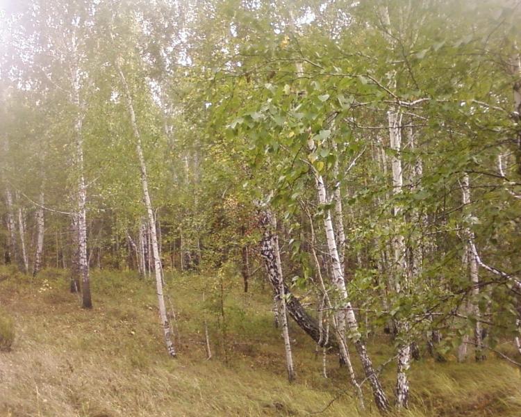 лес24