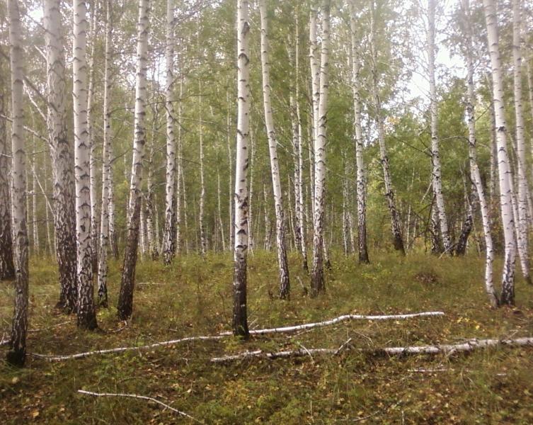 лес26