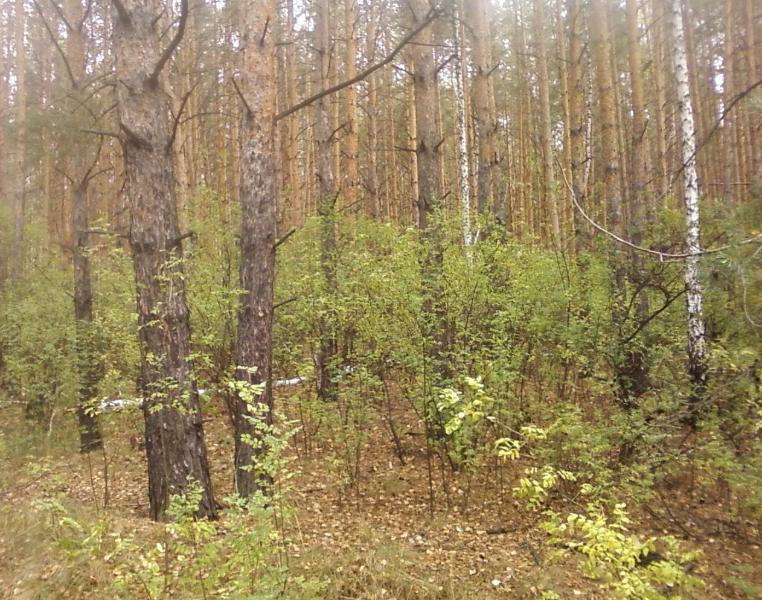лес27
