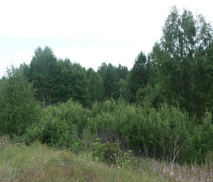 смешанный лес1