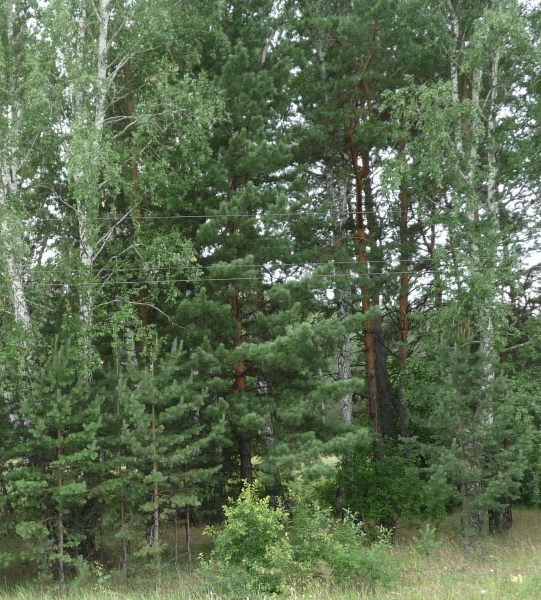 смешанный лес2